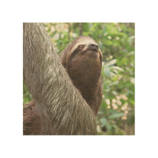 Sloth Climbing Wood Print