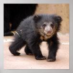 sloth-cub10x10 poster