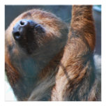 Sloth Face  Invitations