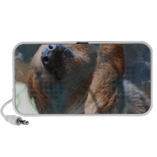 Sloth Face Speakers