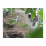 sloth in tree card