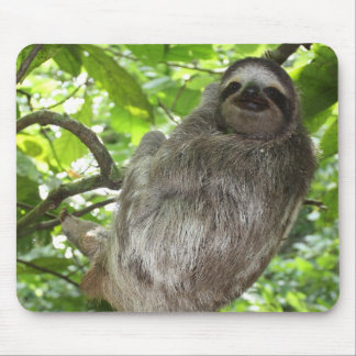 Sloth in Tree Mouse Pad