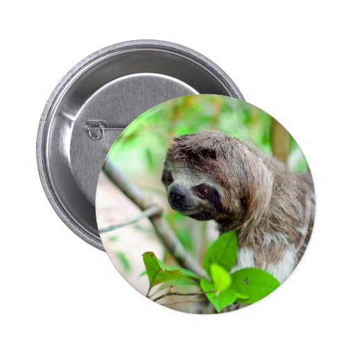 Sloth in tree Nicaragua 2 Inch Round Button