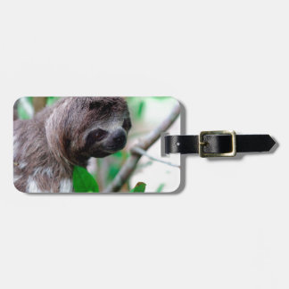 Sloth in tree Nicaragua Luggage Tag