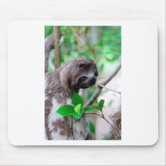 Sloth in tree Nicaragua Mouse Pad
