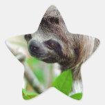 Sloth in tree Nicaragua Star Sticker