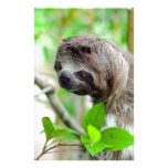 Sloth in tree Nicaragua Stationery