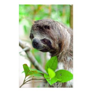 Sloth in tree Nicaragua Custom Stationery