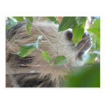 sloth in tree postcards