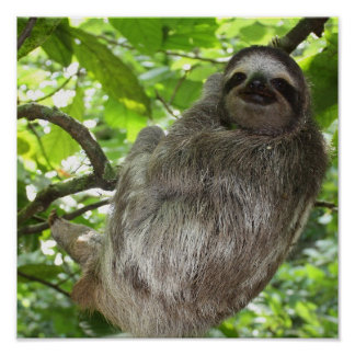 Sloth in Tree Poster