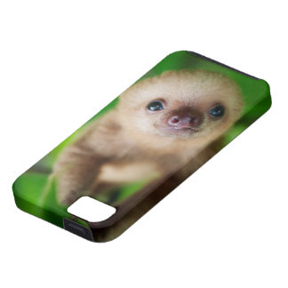 Sloth iPhone Case iPhone 5 Cover
