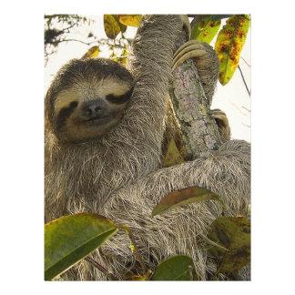 Sloth Letterhead