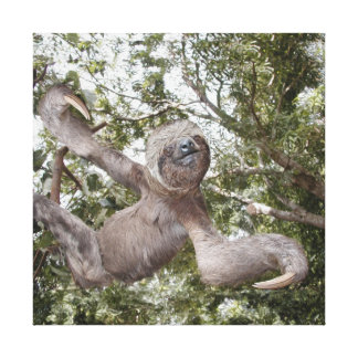 Sloth Love Canvas Print