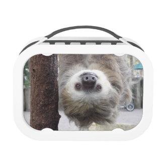Sloth Lunchbox