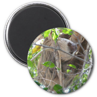 sloth 2 inch round magnet