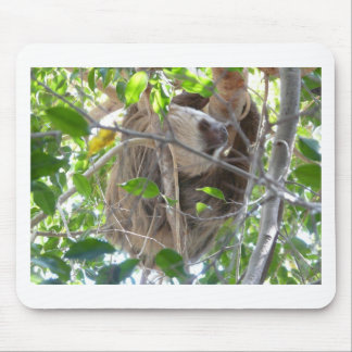 sloth mousepads