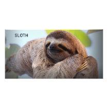 Sloth on tree card