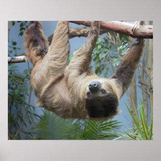 Sloth Photo Poster