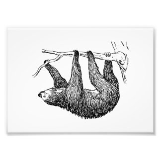Sloth Photograph
