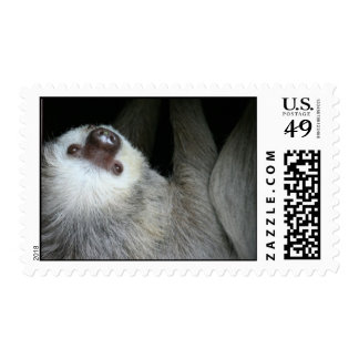 Sloth Postage Stamp
