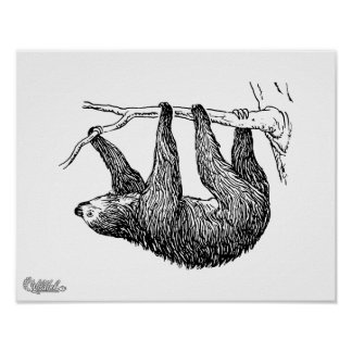 Sloth Posters