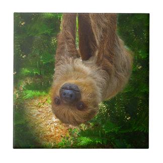 Sloth Rainforest Gifts Ceramic Tile