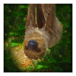 Sloth Rainforest Poster