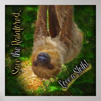 Sloth Rainforest Poster
