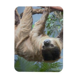 Sloth Rectangular Photo Magnet