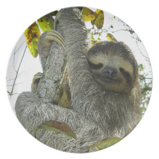 Sloth Up A Tree Dinner Plate