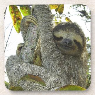 Sloth Up A Tree Drink Coaster