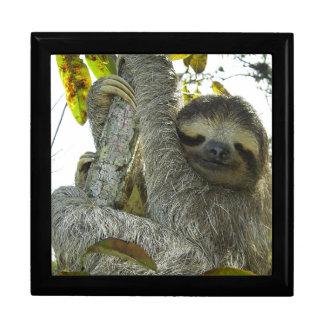 Sloth Up A Tree Keepsake Box