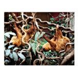 Sloths Postcard