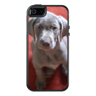 Slovakian Rough Haired Pointer 2 OtterBox iPhone 5/5s/SE Case