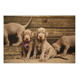 Slovakian Rough Haired Pointer Puppies Wood Wall Art