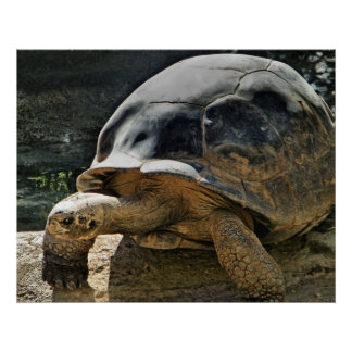slow and steady tortoise print