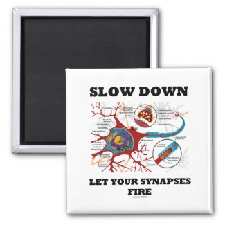 Slow Down Let Your Synapses Fire Neuron / Synapse Refrigerator Magnets
