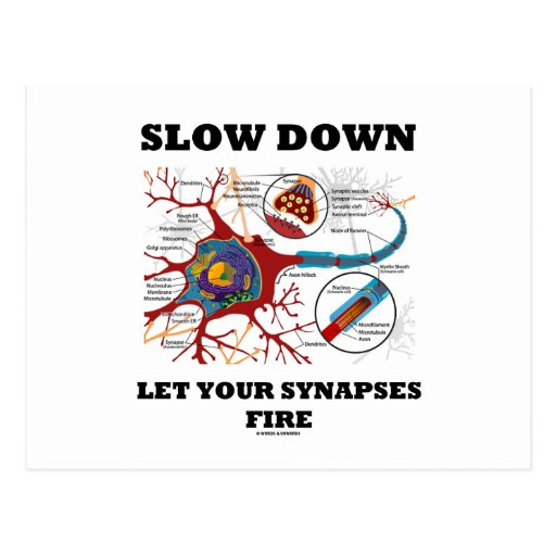Slow Down Let Your Synapses Fire Neuron / Synapse Post Cards