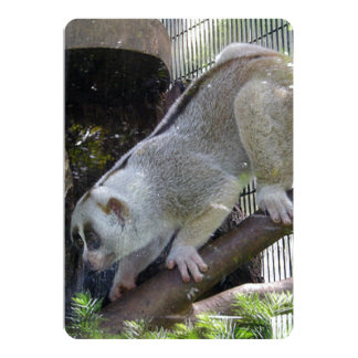 Slow Loris Descends Branch In Zoo Enclosure 5x7 Paper Invitation Card