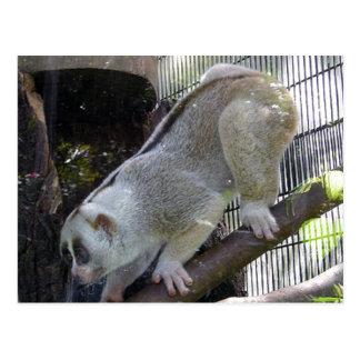 Slow Loris Descends Branch In Zoo Enclosure Postcard