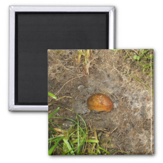 Slug 2 Inch Square Magnet