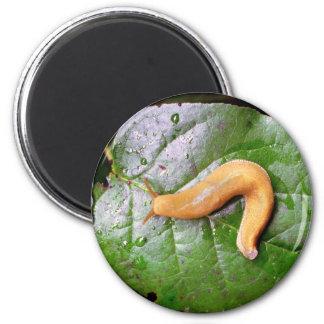 Slug on Leaf Magnet