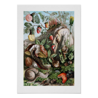 Slugs and Snails Poster