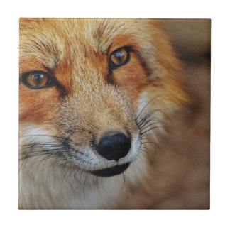 Sly Fox Tile