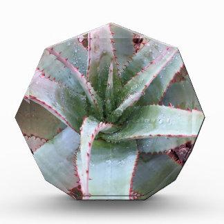 Small agave award