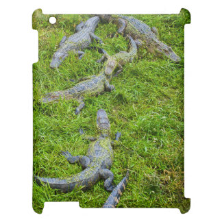Small Alligators Basking Case For The iPad 2 3 4