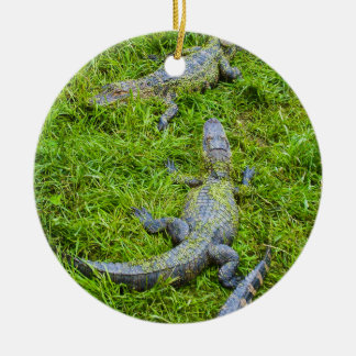 Small Alligators Basking Ceramic Ornament