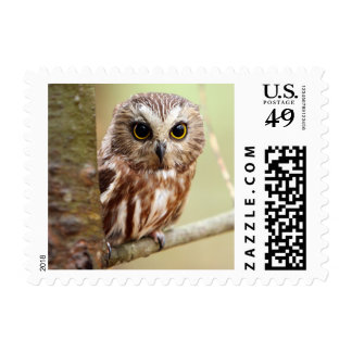 Small Baby Owl (Ontarios) Stamp