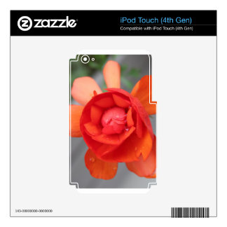 Small Begonia iPod Touch 4G Decals