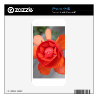 Small Begonia Skins For iPhone 4